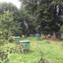Пчел-пакеты, в г.Миоры