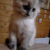 Кошечка, в Алексине