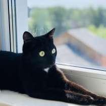 Кошка, в Новосибирске