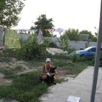 Дрессировка собак, в г.Днепропетровск