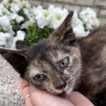 Отдам котёнка в добрые руки, в Уфе