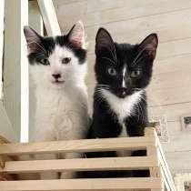 Ласковые, ручные, мягонькие котята, в Санкт-Петербурге