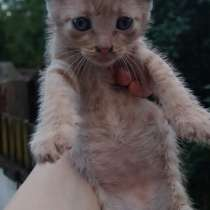 Отдам даром: котята в Королёве, в Королёве