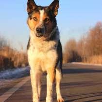 Собака в добрые руки, 2 года, в Москве