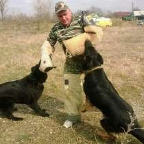 Дрессировка собак, в Армавире