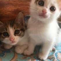 Котята в добрые руки !, в Набережных Челнах