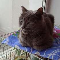 Стерилизованной кошке ищем дом, в Кургане