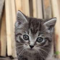 Котята в добрые руки, в Томске