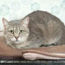Кошка Лилу - серебристая красавица, ищет дом, в Москве
