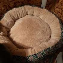 Кроватка для щенка или котенка, или маленькой собачки, в г.Рига