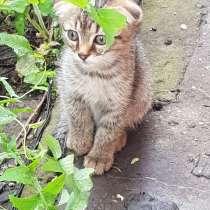 Котенок, в Набережных Челнах