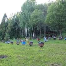 Продам липовый мед, в Симферополе