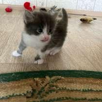 Котята в добрые руки, в Алексине