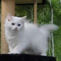 Продажа котенка-, в г.Прага