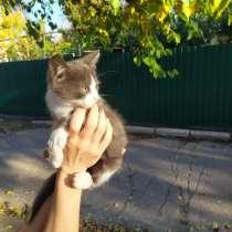 Котеночек, в г.Донецк