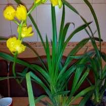 В наличии орхидеи цветущие и не цветущие, в г.Чернигов