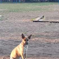 Щеночек ищет дом, в Нижнекамске