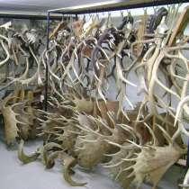 Куплю рога диких животных, в Иркутске
