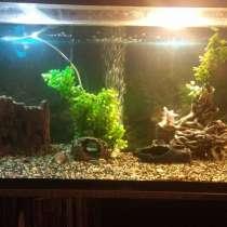 Продам аквариум, в Чите