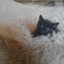 Отдам прекрасных котят, в Иркутске