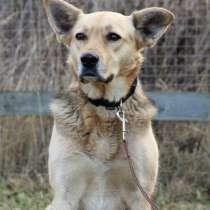 Собака, которая познала Дзен ищет дом, в Москве