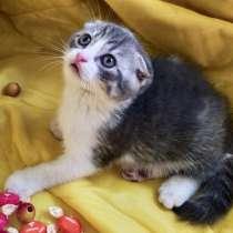 Продам вислоухих котят, в г.Мариуполь