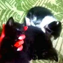 Котята в хорошие руки, в г.Гомель