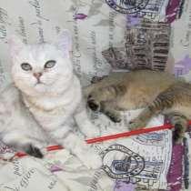 Чистопородные котята, в г.Бендеры