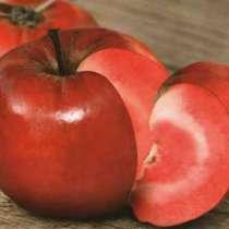 Саженцы яблонь с красной мякотью, в г.Брест