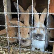 Крольчата !, в Твери