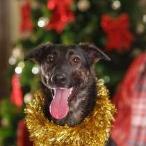 Красивая ласковая собака ищет дом, в Санкт-Петербурге