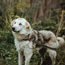 Ищет дом пес как большая мягкая игрушка, в Санкт-Петербурге