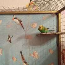 Попугай, в Брянске
