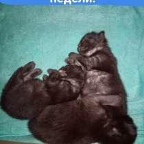 Котята ищут хозяев, в г.Могилёв