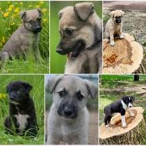 Для собачьего счастья нашим хвостикам не хватает дома, в Москве