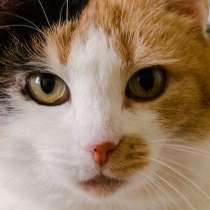 Кошечка Элли ищет дом! В добрые руки!, в Москве