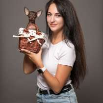Русский Той (терьер) в Израиле купить щенка в питомнике, в г.Нетания