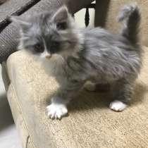Котёнок, в Ростове-на-Дону