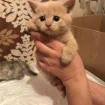 Отдам котят в добрые руки, в Ивантеевка