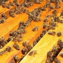Продаю средне-русских пчел, в Набережных Челнах