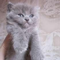 Милые котята, в г.Донецк