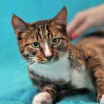 Игривый котенок Павлуша ищет дом, в Москве