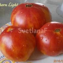 Семена томатов от Светланы (800 сортов), в Пятигорске