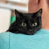 Благородная Эльза, роскошная молодая черная кошечка в дар, в Москве