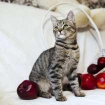 Котёнок в дар, в г.Минск