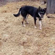 Собака Альфа стерилизованная, в Кургане