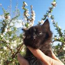 Отдам милых котят в добрые и заботливые ручки, в г.Костанай