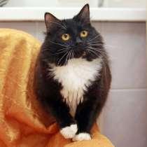 Молодая кошка в добрые руки. Миниатюрная Мальта, в Калуге