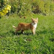 Кошечка в добрые руки, в Сергиевом Посаде
