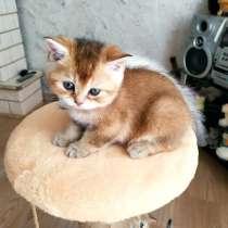 Котята, в Улан-Удэ